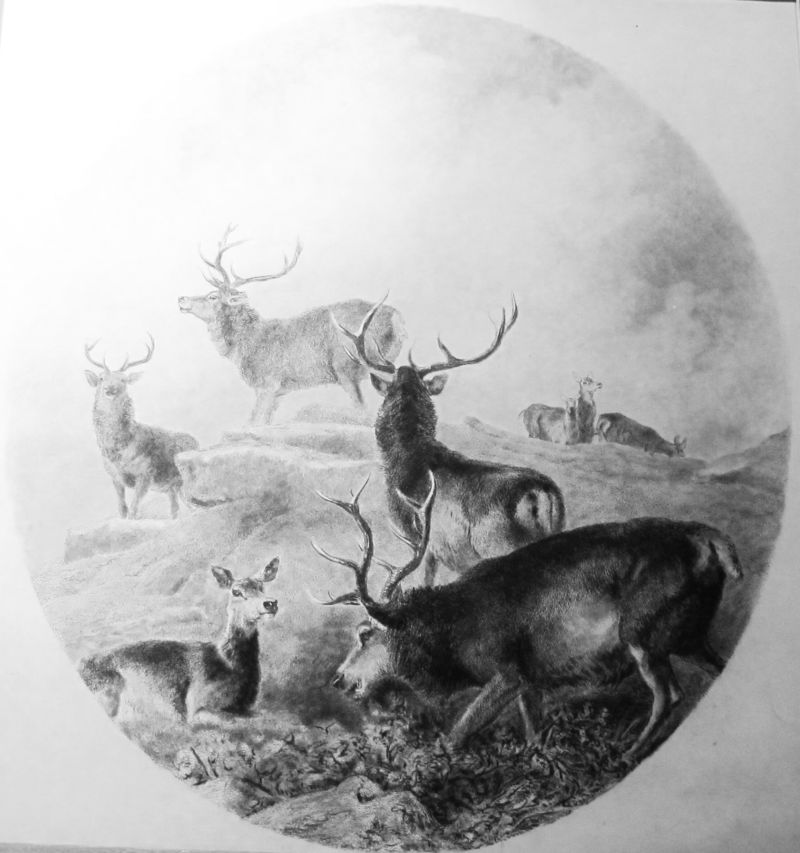 Ciervos > Grabados, Caza / Hunting . Frame | Grabados, Mapas ...