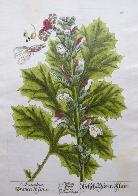 Resultado de imagen de libros antiguos botanica